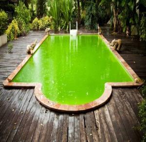 Проблемы с водой в бассейне
